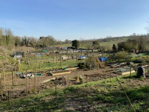Picture of Allotments
