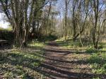 Image: Picture of the woodland / old railway line.